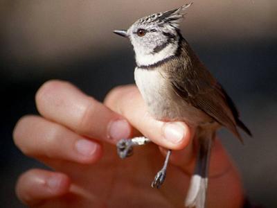 Aves en primavera: las que nos visitan y las que se quedan